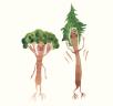 Kdyby lidi byli stromy